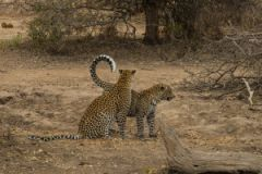 Timbavati Game Reserve Lodges